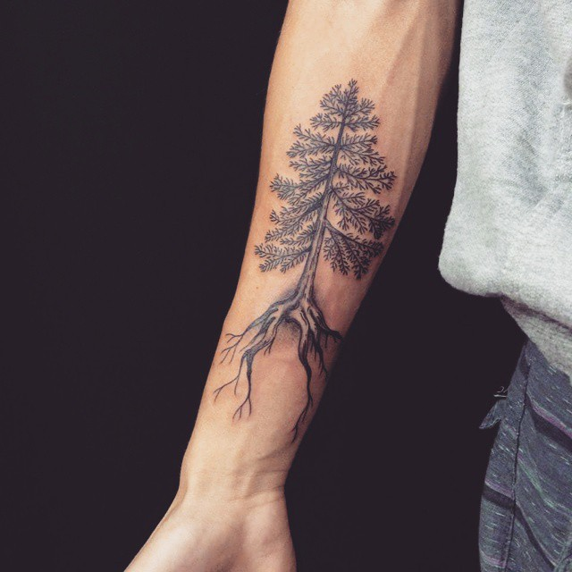 Pine with Roots